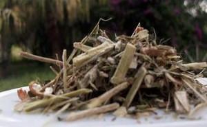 Katzenkralle Tee aus Südamerika